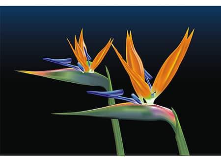 CorelDRAW Graphics Suite X5 v15.2.0.686 SP3 Gallery_ariel_garaza_2_lrg